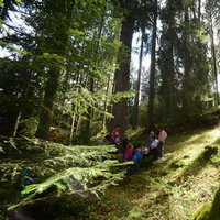 Children in Cavalese wood  - Playing in the woods of Val di Fiemme